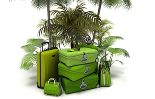 green-holiday essentials