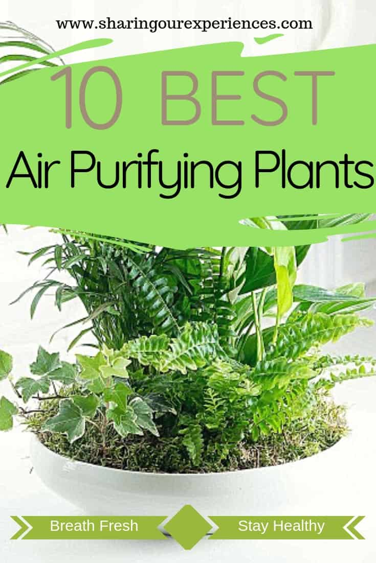 10 Best Air Purifying Plants For Your Home To Improve Air