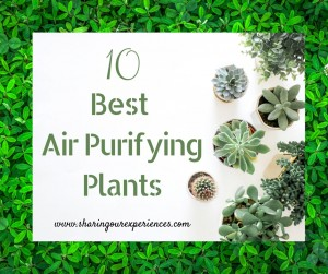 10 Best Air Purifying Plants for Your Home to Improve Air Quality