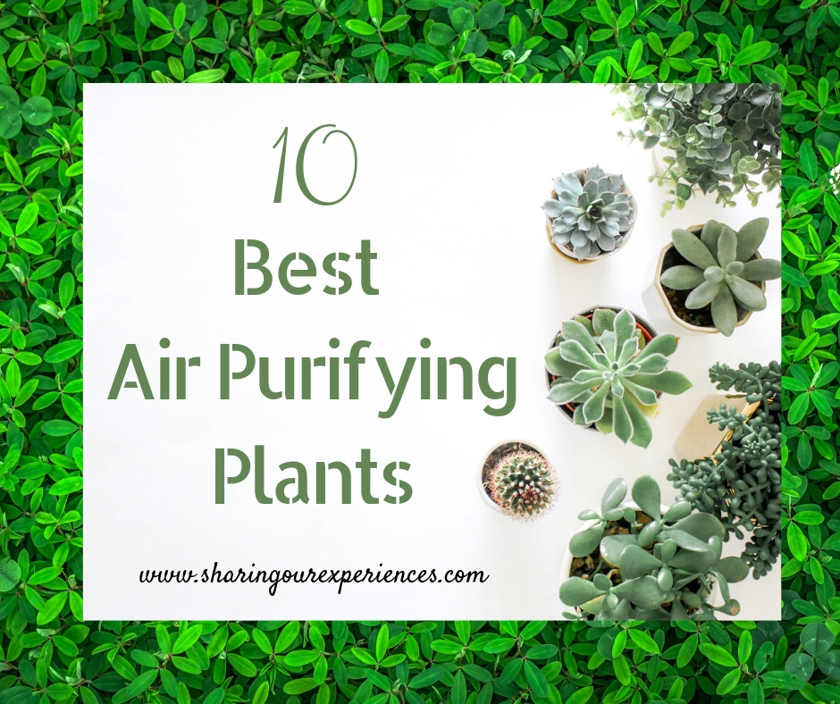 10 Best Air Purifying Plants For Your Home To Improve Quality