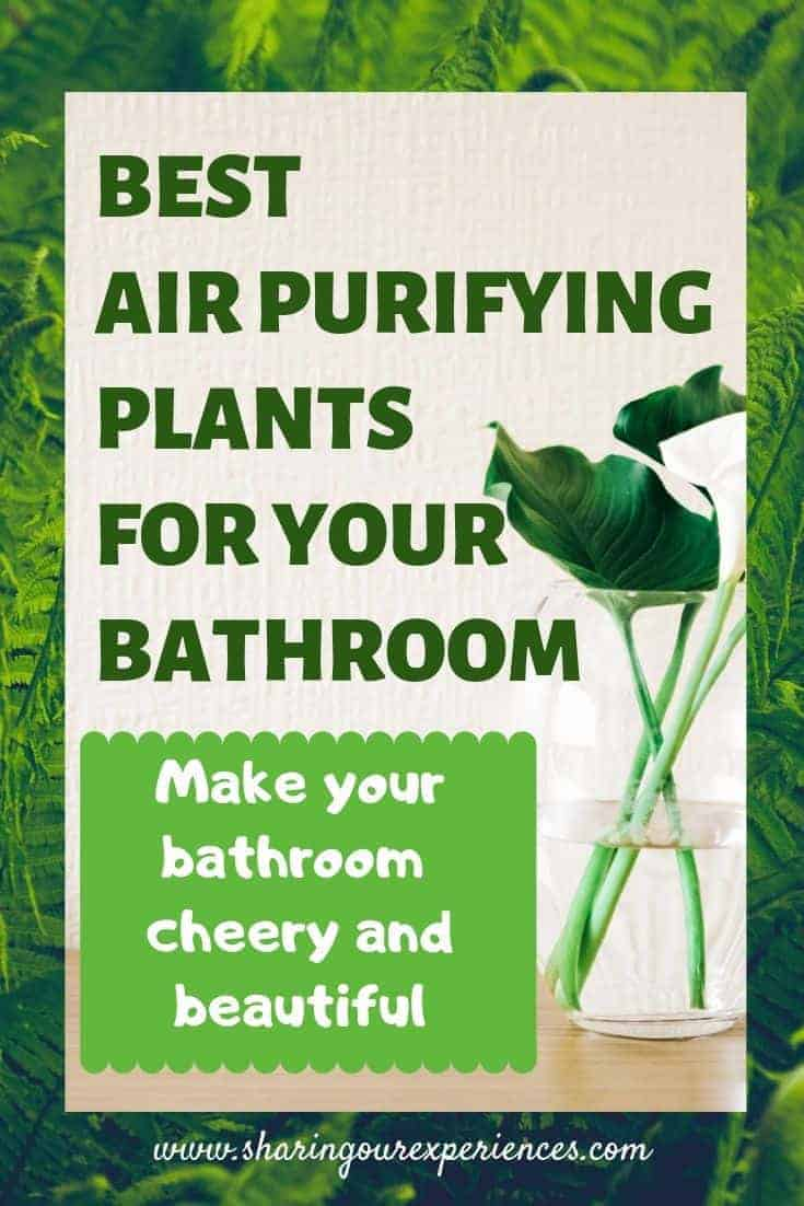EST  AIR PURIFYING   PLANTS  FOR YOUR  BATHROOM