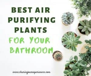 best air purifying plants for your bathroom