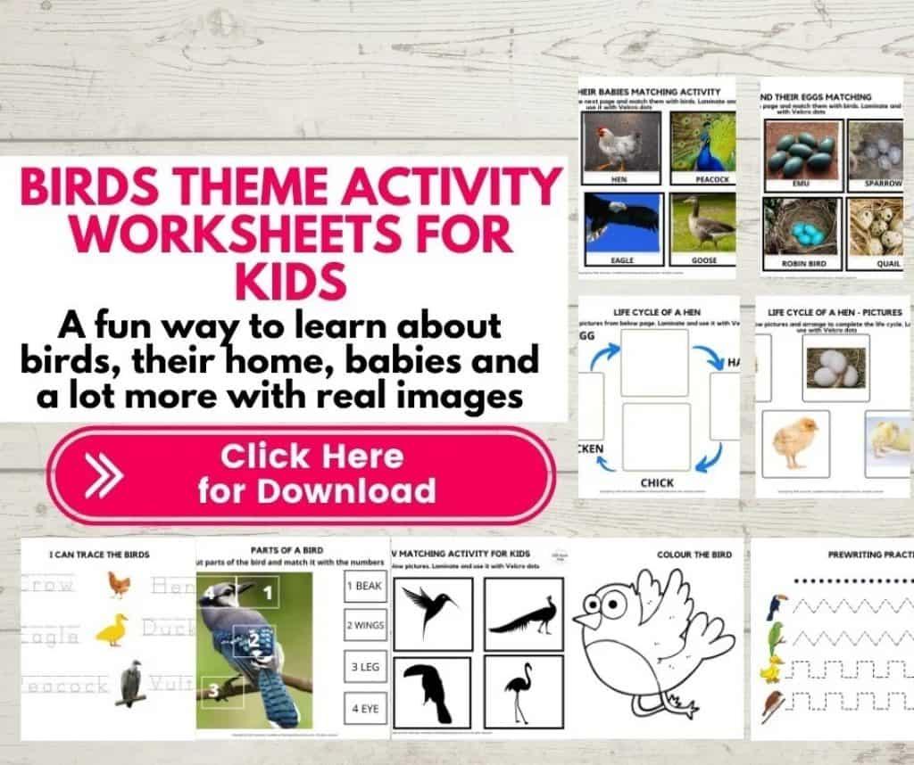 Bird theme activity worksheets for kids bundle mock up