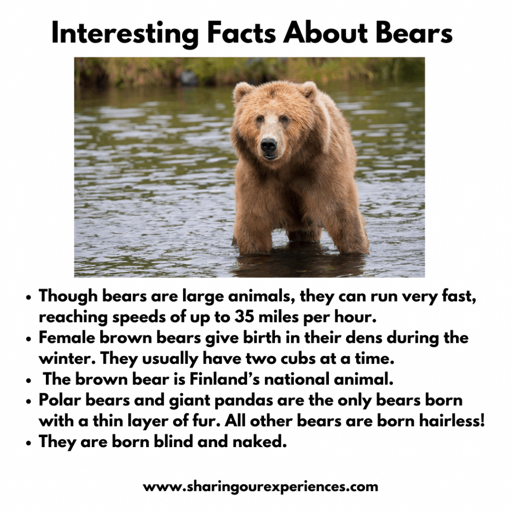 Fun And Interesting Facts About Wild Animals For kIds- Bears
