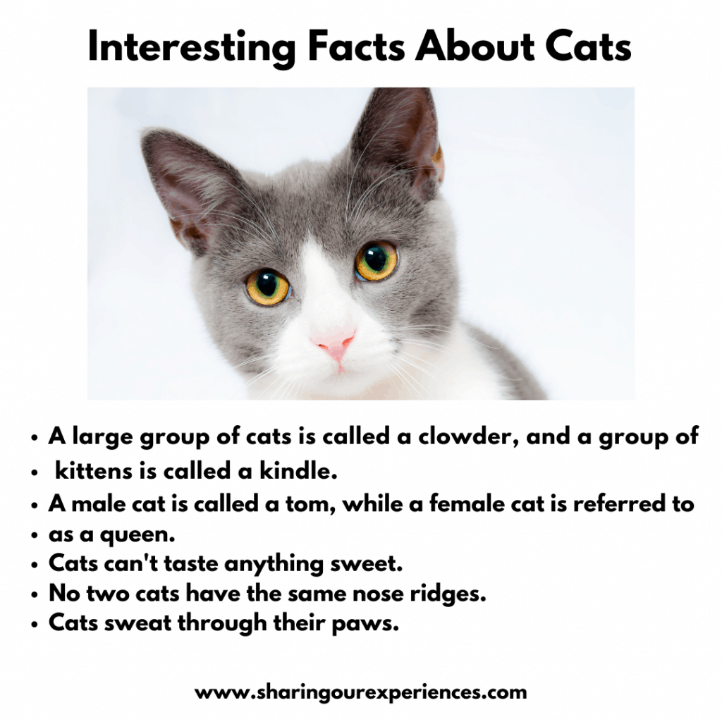 Fun and Interesting facts about pet animals for kids- Cats