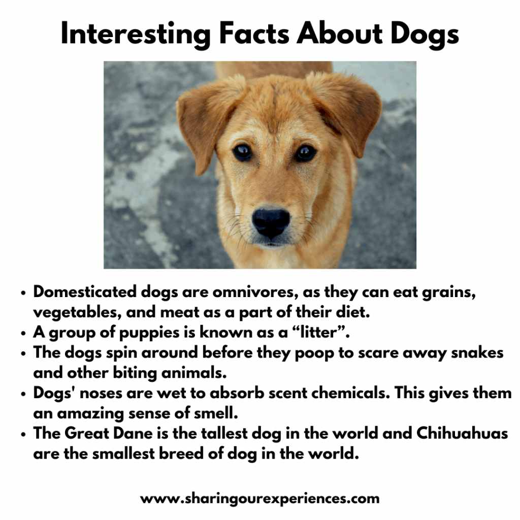 Interesting Facts about Pet Animals For kids- Dogs