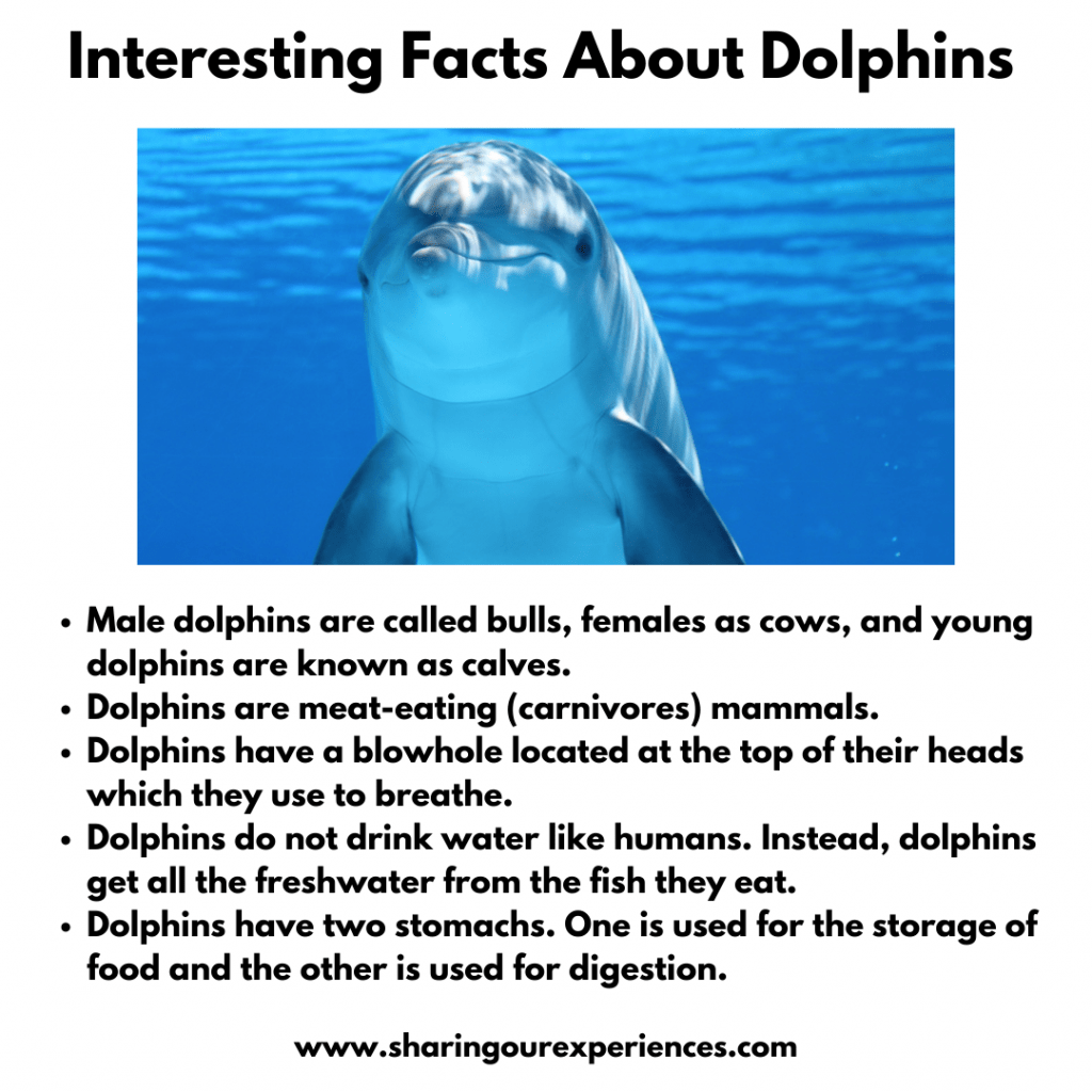 Fun and Interesting Facts About Sea animal -Dolphins