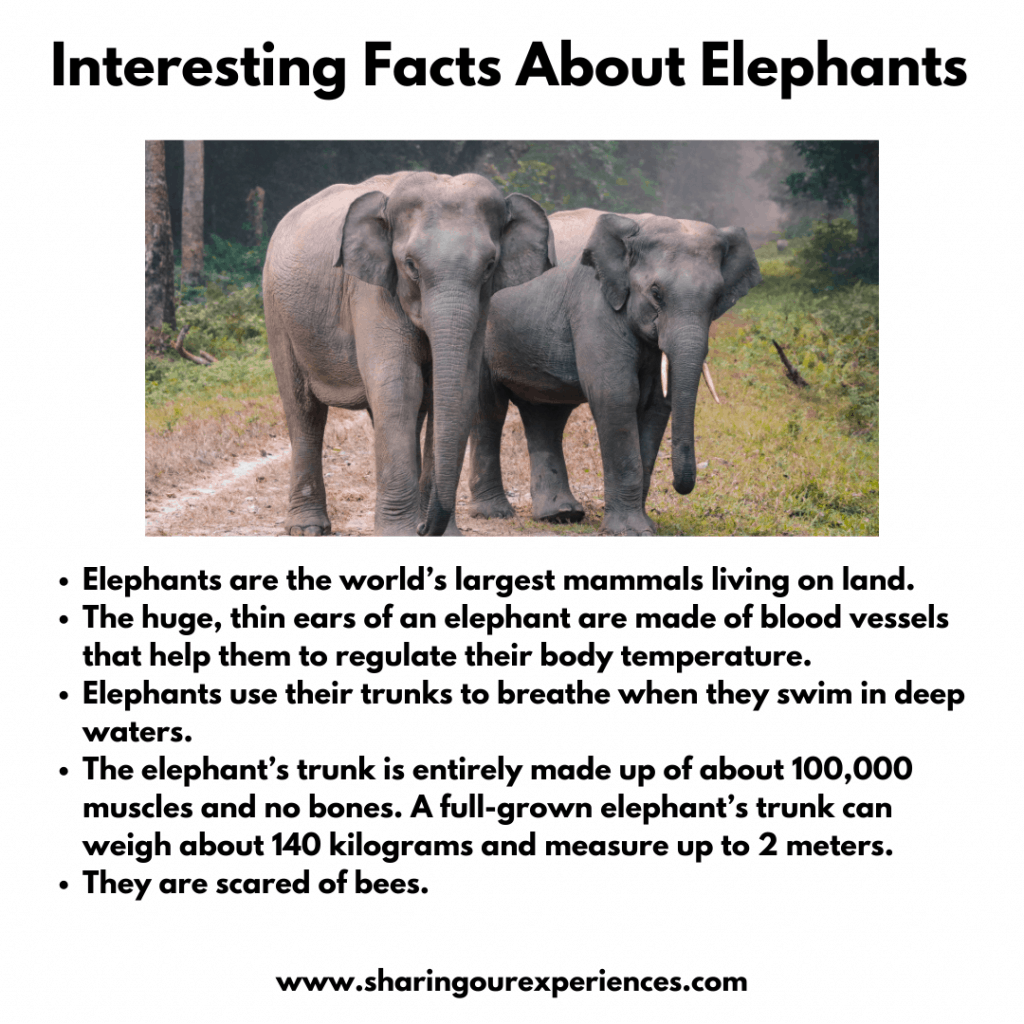 Fun And Interesting Facts About Wild Animals For Kids-Elephants