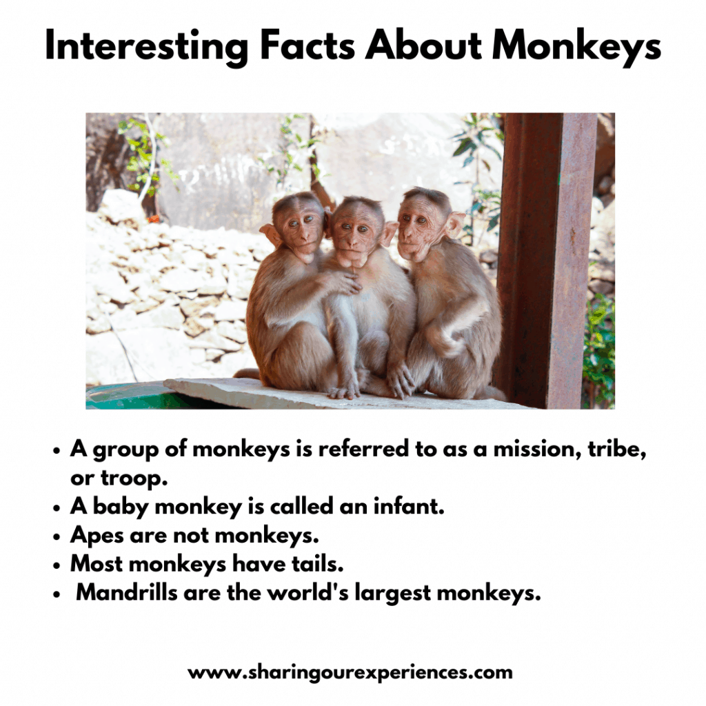 Interesting And Fun Facts About Wild Animals For Kids- Monkeys