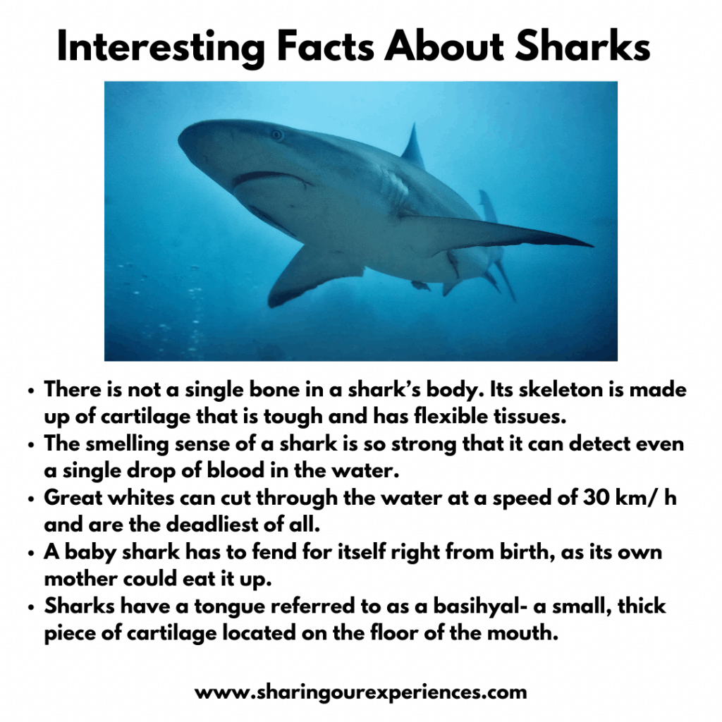 Fun and interesting facts about Sea animals for kids- sharks