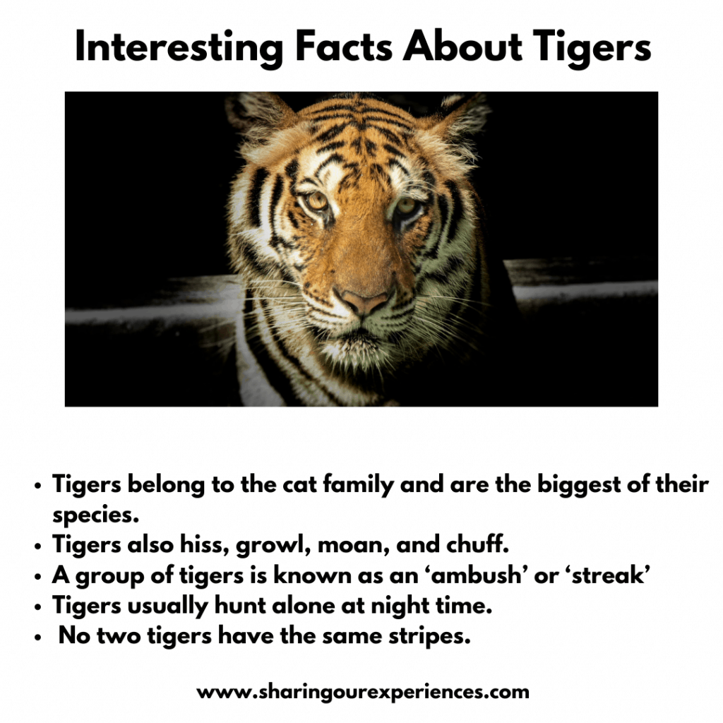 Fun And Interesting Facts About Wild Animals For Kids- Tigers