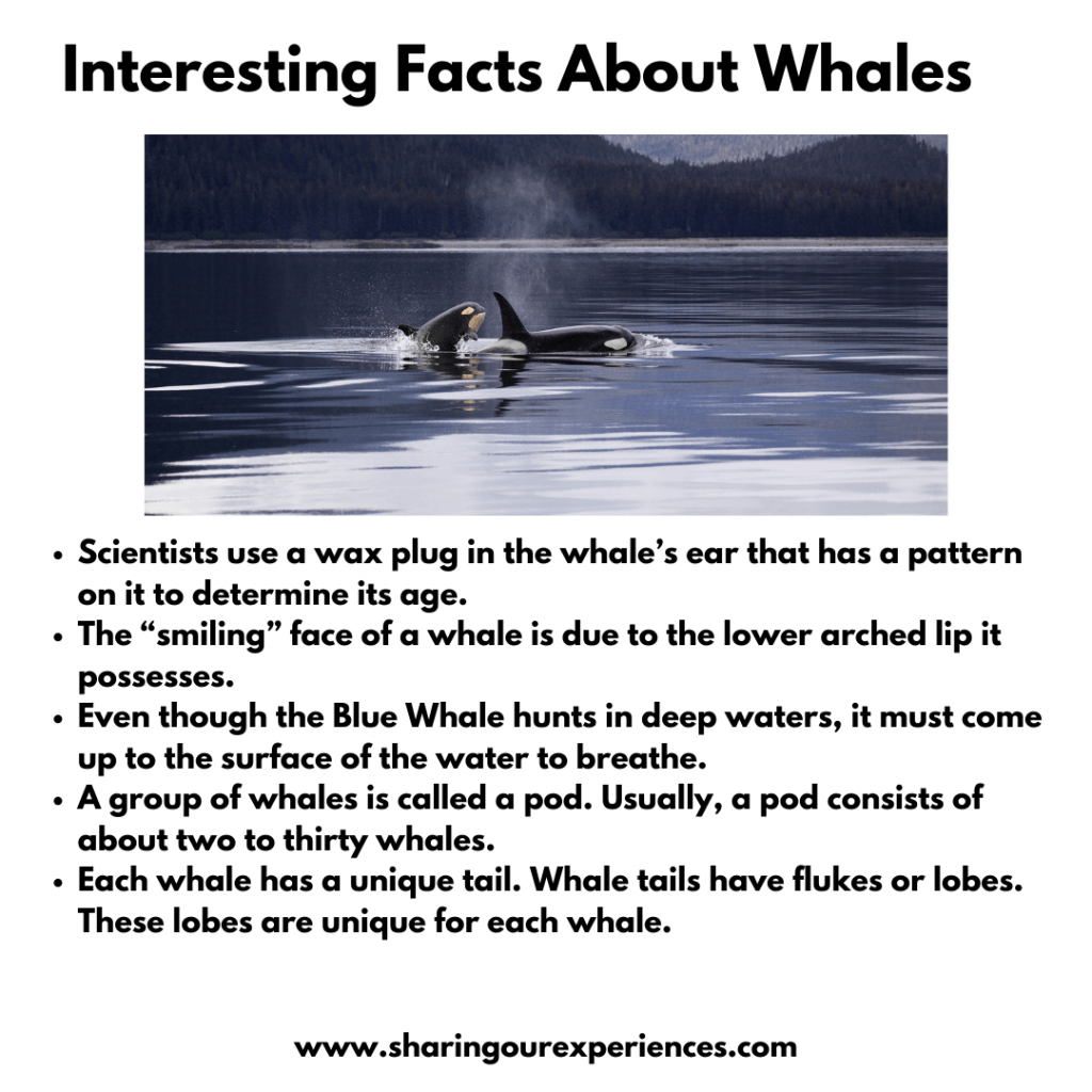 Fun And Interesting facts about Whales for kids