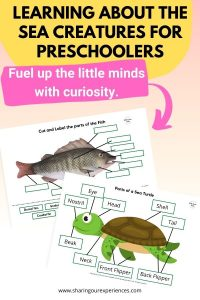 Learning about the Sea Creatures for preschoolers